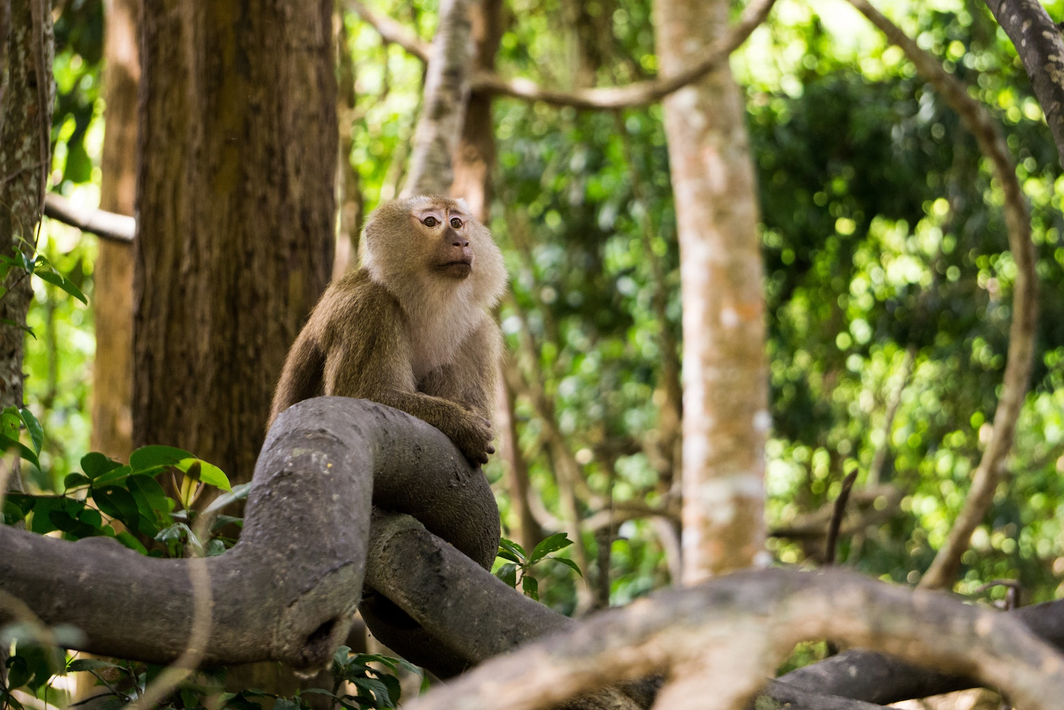 Help for health and legal problems in August – month of the Earth Monkey 戊申
